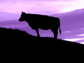 Be a Purple Cow