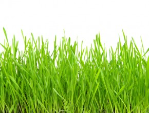 Novel Market Strategies: Painting the Grass Green, Revisited